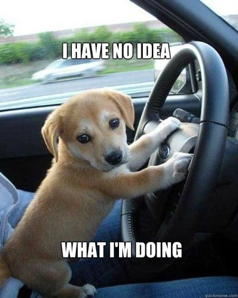 Image result for learning to drive